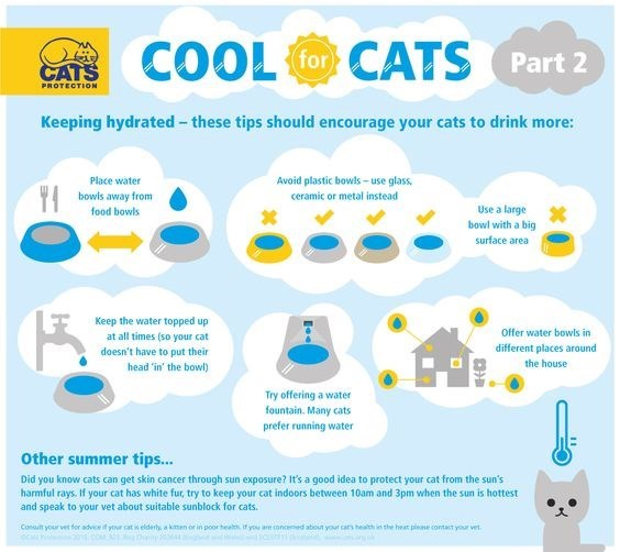 Product - COOL CATS for Part 2 CATS PROTECTION Keeping hydrated-these tips should encourage your cats to drink more: Place water Avoid plastic bowls-use glass bowls away from ceramic or metal instead Use a large food bowls bowl with a big surface area Keep the water topped up Offer water bowls in at all times (so your cat different places around doesn't have to put their head 'in' the bowl) the house Try offering a water fountain. Many cats prefer running water Other summer tips... Did you know