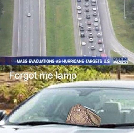 moth meme - Automotive exterior - NCLY MASS EVACUATIONS AS HURRICANE TARGETS U.S. ANEWS Forgot me lamp