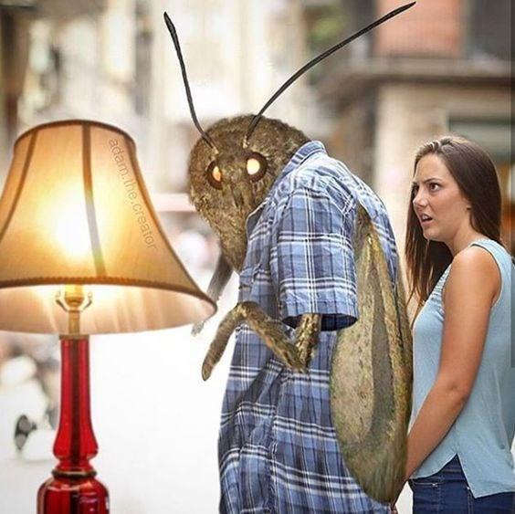 moth meme - Lampshade - adam.the.creator