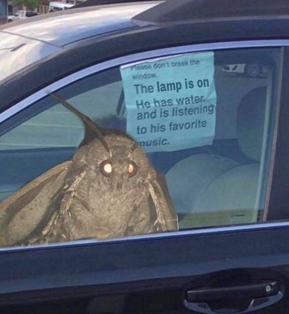 moth meme - Vehicle door - Pease don't break the window The lamp is on He has water and is listening to his favorite music