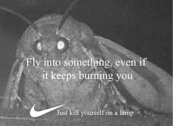moth meme - Organism - Fly into something, even if it keeps burning you Just kill yourself on a lamp