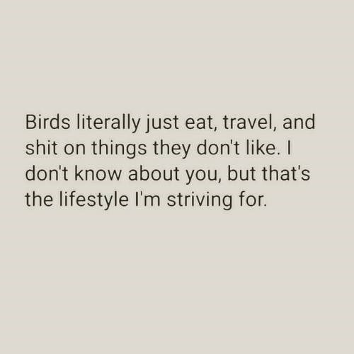 birds literally just eat travel and shit on things they don't like