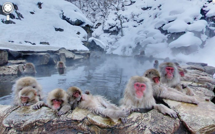 google street view - Macaque