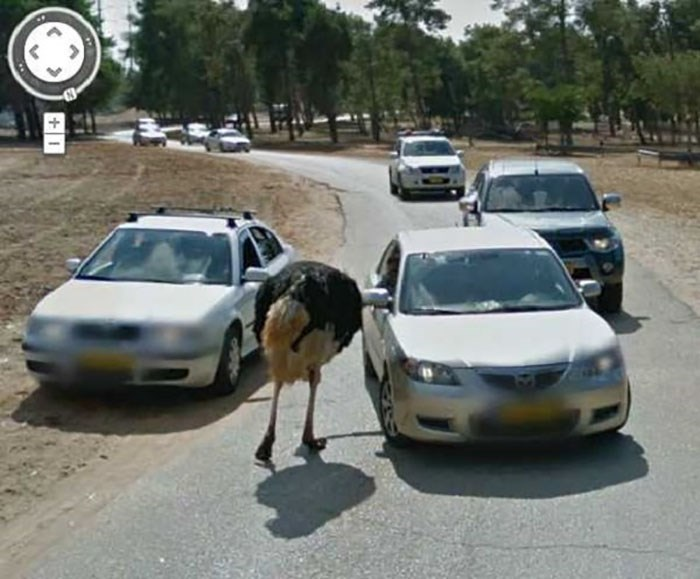 google street view - Land vehicle