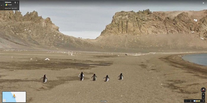 google street view - Penguin - Googh