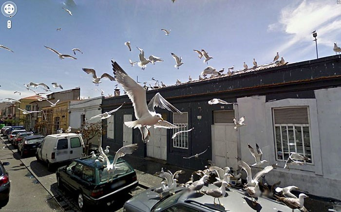 google street view - Pigeons and doves