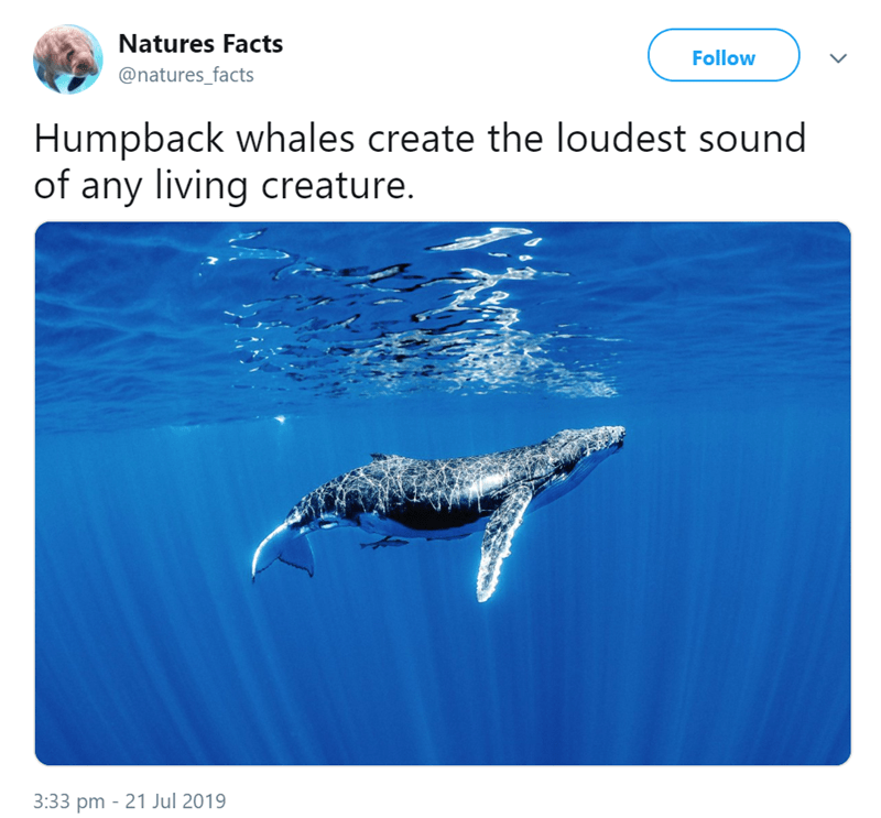 animal fact - Marine mammal - Natures Facts Follow @natures_facts Humpback whales create the loudest sound of any living creature. 3:33 pm 21 Jul 2019