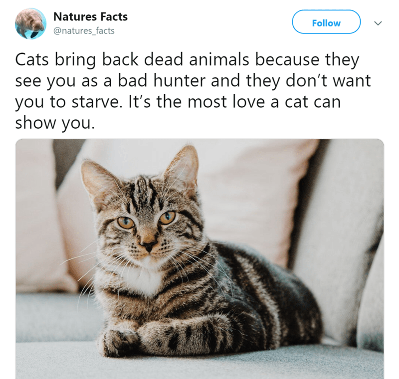 animal fact - Cat - Natures Facts Follow @natures_facts Cats bring back dead animals because they see you as a bad hunter and they don't want you to starve. It's the most love a cat can show you.