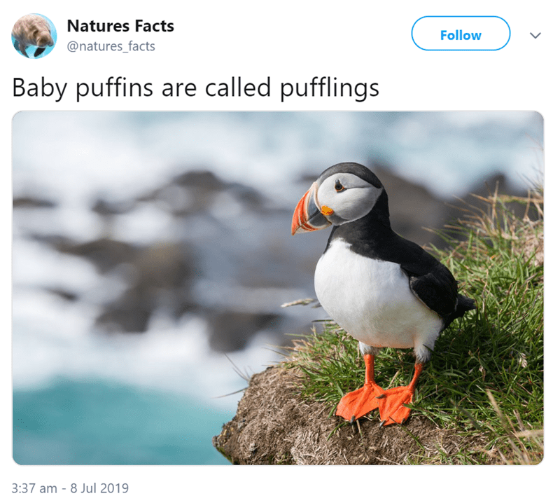 animal fact - Bird - Natures Facts Follow @natures_facts Baby puffins are called pufflings 3:37 am 8 Jul 2019