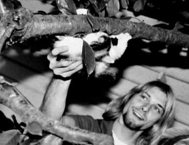 kurt cobain - Photograph