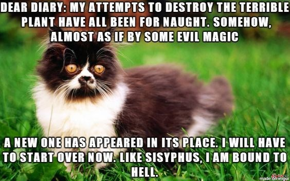 Dog breed - DEAR DIARY: MY ATTEMPTS TO DESTROY THE TERRIBLE PLANT HAVE ALL BEEN FOR NAUGHT. SOMEHOW, ALMOST AS IF BY SOME EVIL MAGIC A NEW ONE HAS APPEARED IN ITS PLACE. I WILL HAVE TO START OVER NOW LIKE SISYPHUS, IAM BOUN D TO HELL made on imgur
