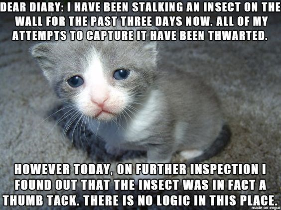 Cat - DEAR DIARY: I HAVE BEEN STALKING AN INSECT ON THE WALL FOR THE PAST THREE DAYS NOW. ALL OF MY ATTEMPTS TO CAPTURE IT HAVE BEEN THWARTED. HOWEVER TODAY, ON FURTHERINSPECTIONI FOUND OUT THAT THE INSECT WAS IN FACT A THUMB TACK. THERE IS NO LOGIC IN THIS PLACE made on imgur