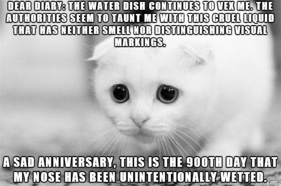 Cat - DEAR DIARY: THE WATER DISH CONTINUES TO VEX ME. THE AUTHORITIES SEEM TO TAUNT ME WITH THIS CRUEL LIQUID THAT HAS NEITHER SMELL NOR DISTINGUISHING VISUAL MARKINGS A SAD ANNIVERSARY, THIS IS THE 900TH DAY THAT MY NOSE HAS BEEN UNINTENTIONALLYWETTED maugton ingus