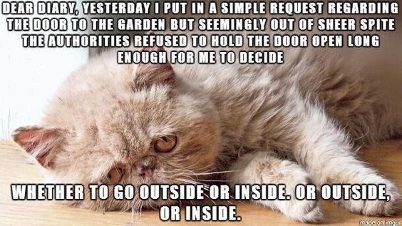 Cat - DEAR DIARY, YESTERDAY I PUT IN A SIMPLE REQUEST REGARDING THE DOOR TO THE GARDEN BUT SEEMINGLY OUT OF SHEER SPITE THE AUTHORITIES REFUSED TO HOLD THE DOOR OPEN LONG ENOUGH FOR ME TO DECIDE WHETHER TO GO OUTSIDE OR INSIDE. OR OUTSIDE OR INSIDE made on imgu