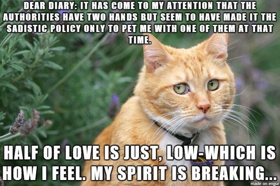 Cat - DEAR DIARY: IT HAS COME TO MY ATTENTION THAT THE AUTHORITIES HAVE TWO HANDS BUT SEEM TO HAVE MADE IT THE SADISTIC POLICY ONLY TO PET ME WITH ONE OF THEM AT THAT TIME HALF OF LOVE IS JUST, LOW-WHICH IS HOW I FEEL, MY SPIRIT IS BREAKING... made on imgur