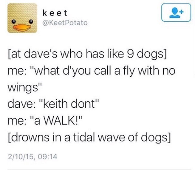 "Text - keet @KeetPotato [at dave's who has like 9 dogs] me: ""what d'you call a fly with no wings"" dave: ""keith dont"" me: ""a WALK!"" [drowns in a tidal wave of dogs] 2/10/15, 09:14"