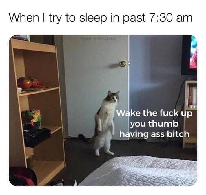 Cat - When I try to sleep in past 7:30 am Ch ingmyceneal Wake the fuck up you thumb having ass bitch