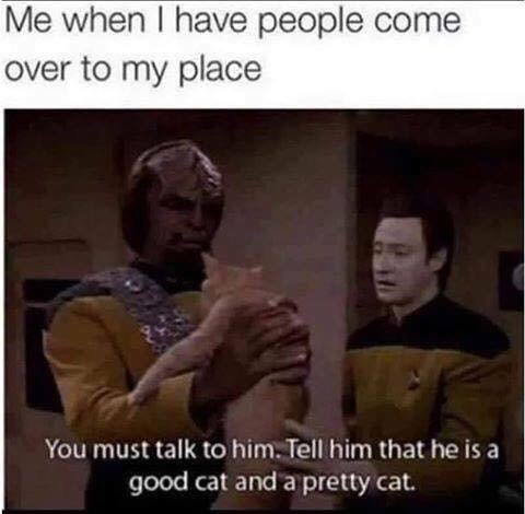 """Meme - Star Trek - """"Me when I have people come over to my place You must talk to him. Tell him that he is a good cat and a pretty cat"""""""