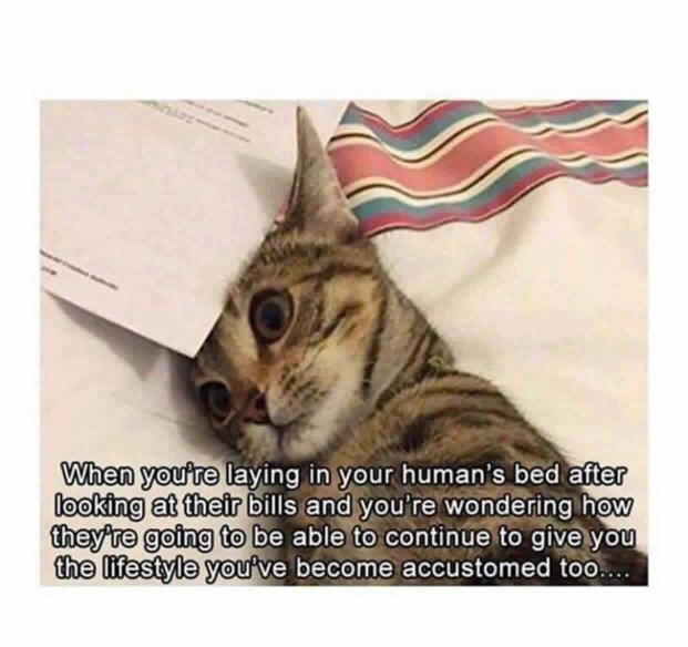 Cat - When you're laying in your human's bed after looking at their bills and you're wondering how they're going to be able to continue to give you the lifestyle you ve become accustomed too...