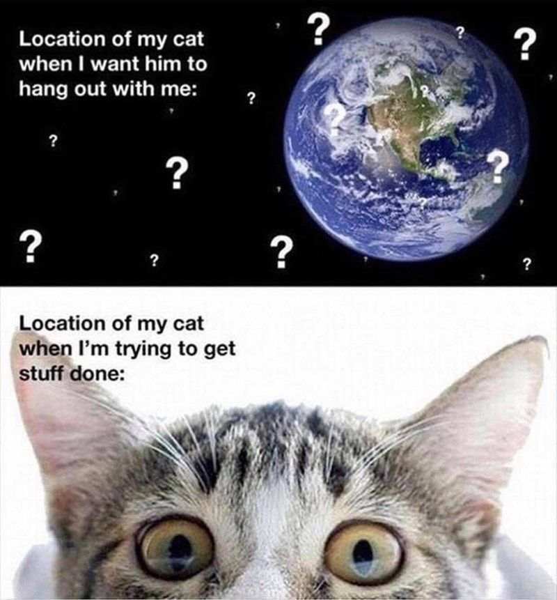 Cat - ?, Location of my cat when I want him to hang out with me: ? ? ? ? ? Location of my cat when I'm trying to get stuff done:
