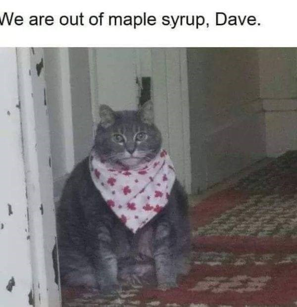 Cat - We are out of maple syrup, Dave.