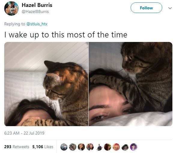 Cat - Hazel Burris Follow @HazelBBurris Replying to @stluis_htx I wake up to this most of the time 6:23 AM 22 Jul 2019 293 Retweets 5,106 Likes