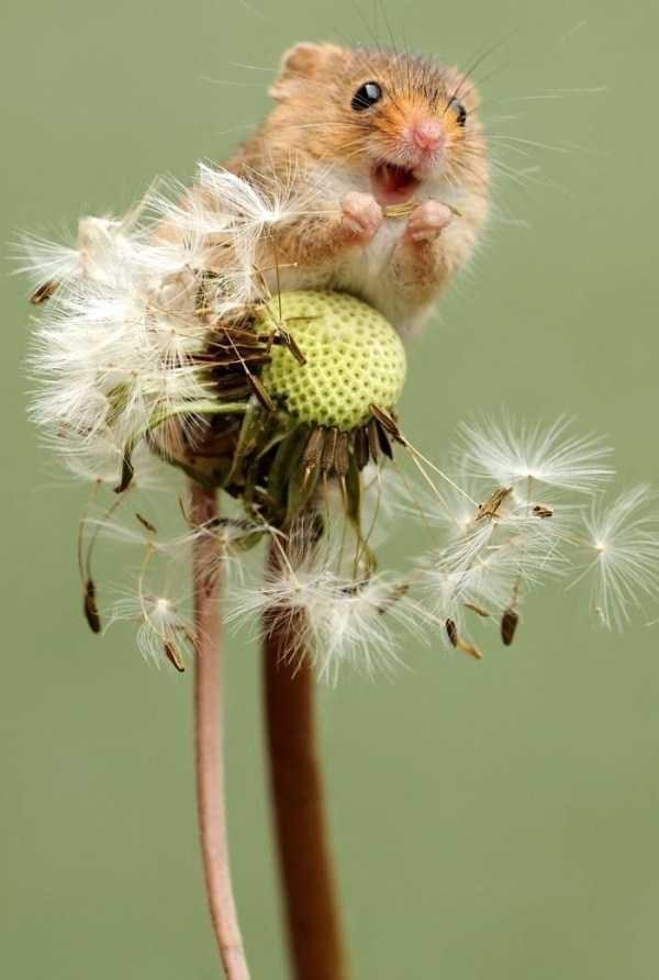 animal pic - dandelion