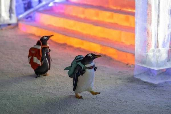 animal pic - Penguin