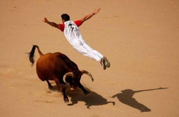 animal pic - Bull
