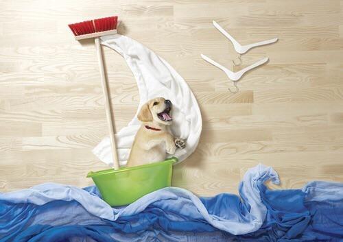 cute - dog in the seas