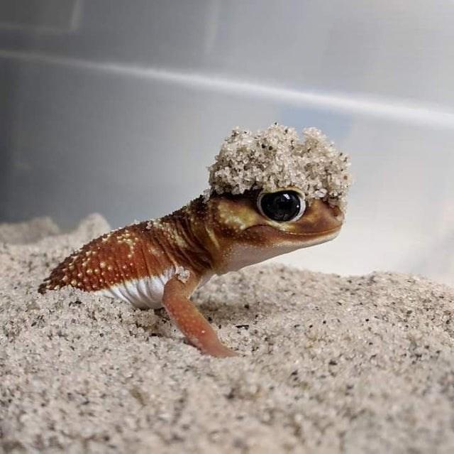 cute - Lizard