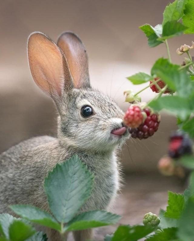 cute - Rabbit
