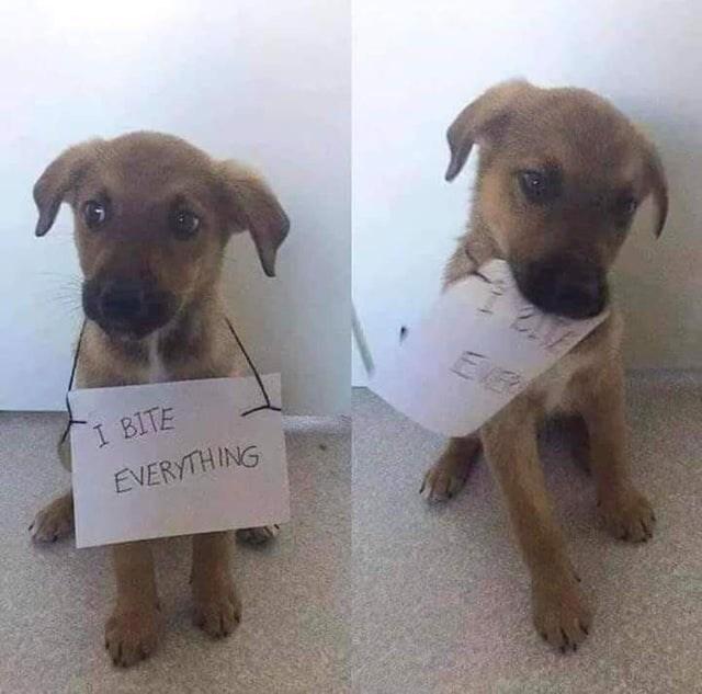 cute - Dog - Er 1 BITE EVERYTHING 014