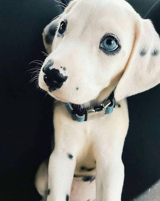 cute - Dog