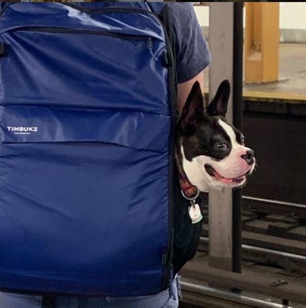 Dog - TIMBUK2