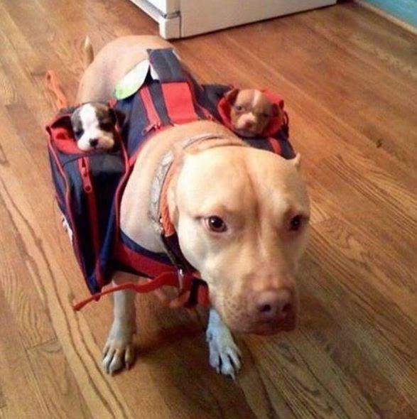 Dog breed - S