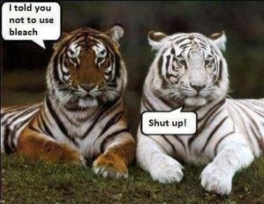 Tiger - I told you not to use bleach Shut up!