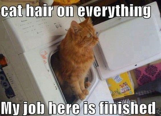 Cat - cat hair on everything t My job here is finished