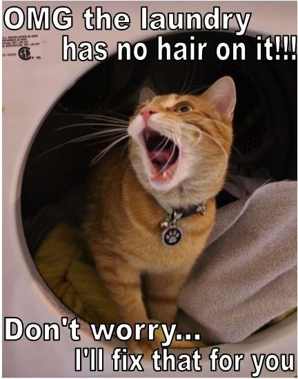Photo caption - OMG the laundry has no hair on it!! is Pe Don't worryo. Ill fix that for you