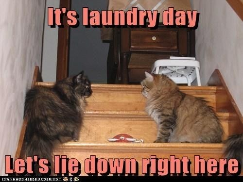 Cat - It's laundry day Let's lie down righthere CANHASCHEE2BURGER ooM