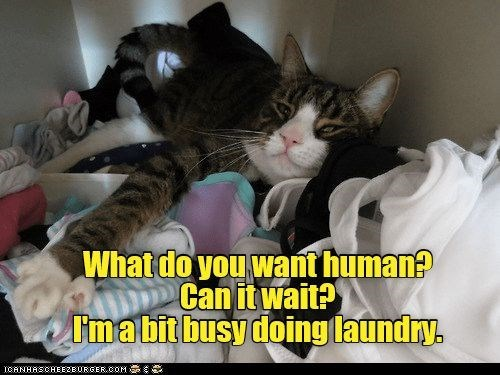 Cat - Whatdo you want human? Can it wait? Imabit busy doing laundry. ICANHASCHEEZBURGER.OOM