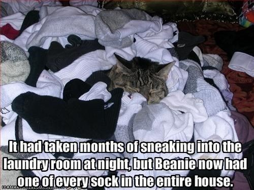 Cat - Ithad taken months ofsneakingintothe laundryroomatnight,but Beanle nowtad one ofevery sockinthe entire house.