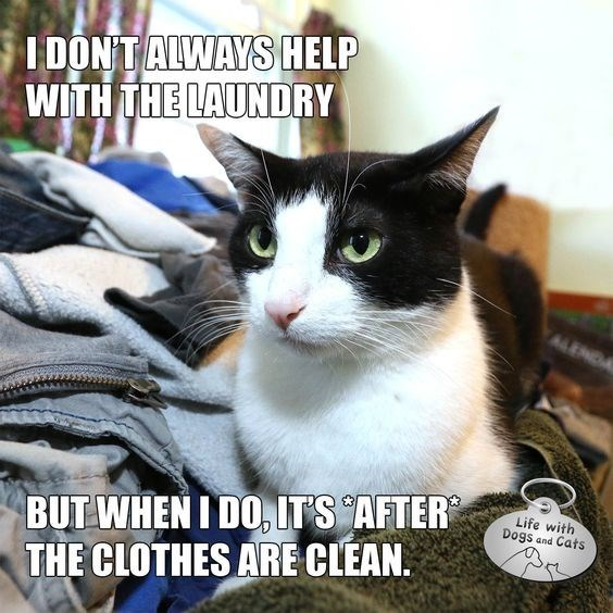 Cat - I DONT ALWAYSHELP WITH THE LAUNDRY BUT WHEN I DO, IT'S AFTER THE CLOTHES ARE CLEAN Life with Dogs and Cats