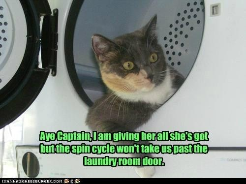 Cat - Aye Captain,lam giving herall she'sgot butthe spincyclewont takeus past the laundry room door. cOC CANHASCHEEZEURGERCOM