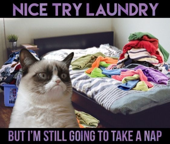 Cat - NICE TRY LAUNDRY BUT I'M STILL GOING TO TAKE A NAP