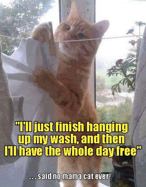 """Cat - """"just finish hanging up my wash, and then Il have the whole day free"""" oSaid no mama cat ever"""