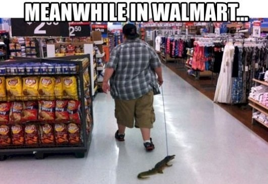 """Meme - """"MEANWHILE IN WALMART"""" with a picture of a guy walking his pet alligator"""
