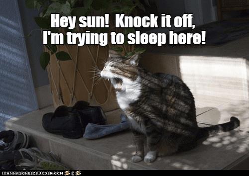 sunlight cat memes - 9336001792