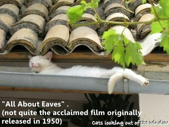 funny cat memes Cat Nap - 9336096000