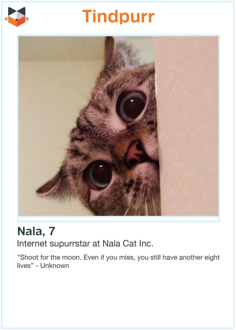 "Text - Tindpurr Nala, 7 Internet supurrstar at Nala Cat Inc. ""Shoot for the moon. Even if you miss, you still have another eight lives"" - Unknown"